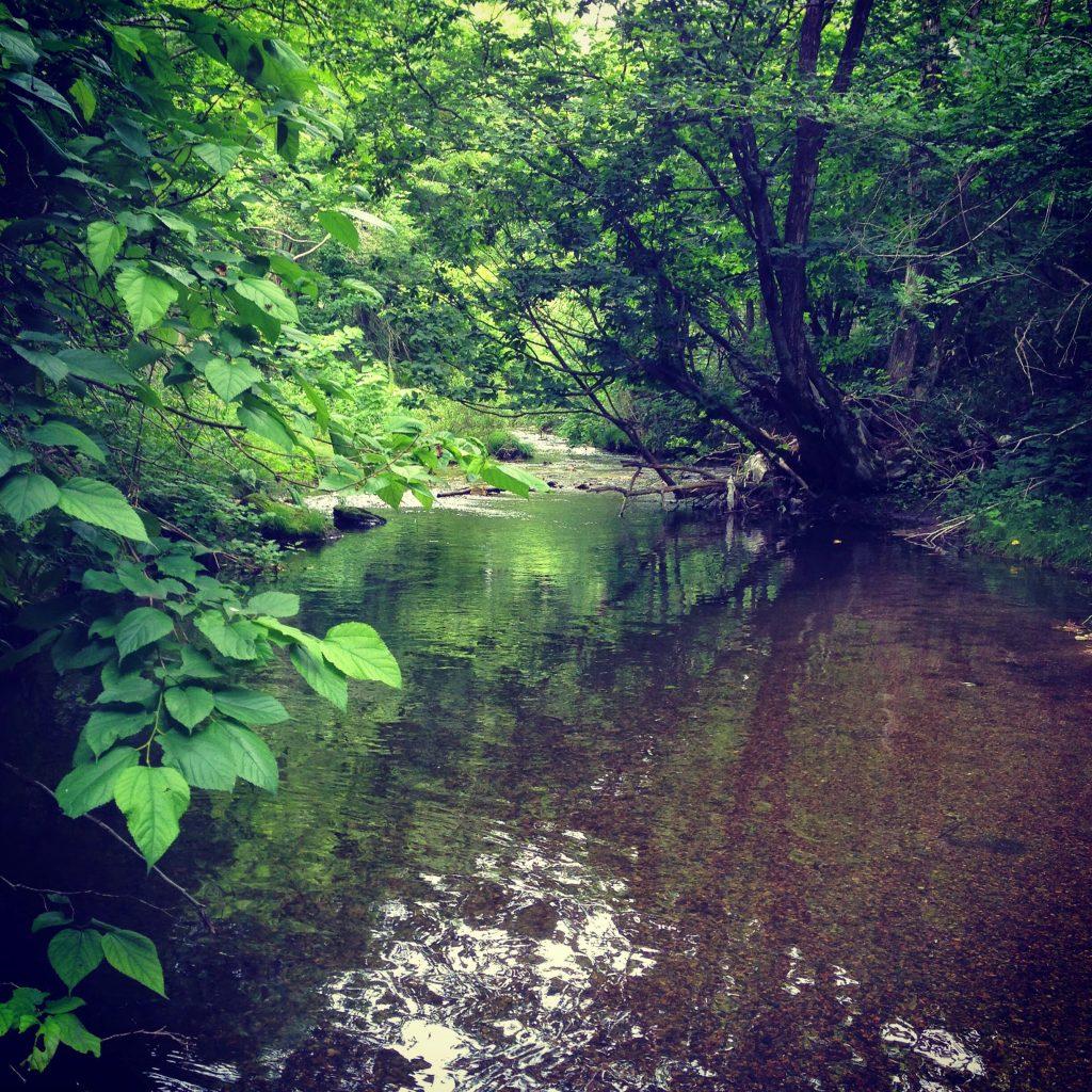 渓流釣りのポイント。