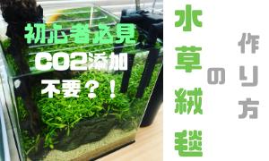 Co2 なし 水草 ソイルや二酸化炭素CO2なしでもそだつ水草って無いの?