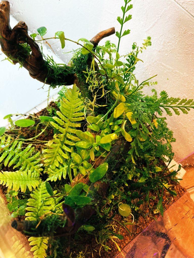 パルダリウム水槽の植物たち。